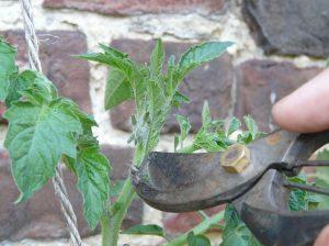 Cultiver ses légumes : semis, plantation, entretien et récolte @ Beersel